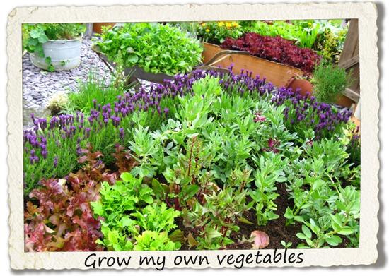 bucket list: grow my own vegetables