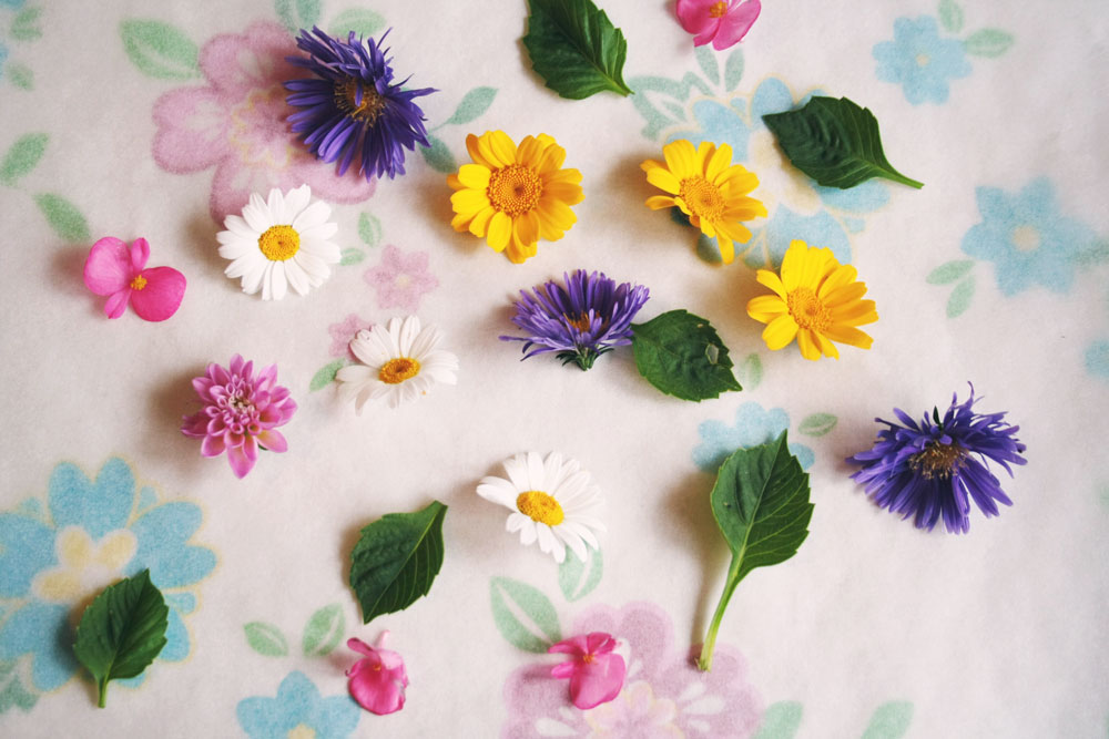 DIY - How to press flowers with an iron
